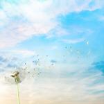 Сlipart Dandelion Wind Pollen Seed Wishing   BillionPhotos