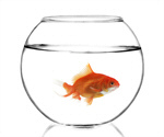 Сlipart Fish Goldfish Fishbowl Gold Fish Tank photo  BillionPhotos