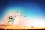 Сlipart dandelion seed wind ruegen blow   BillionPhotos