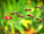 Сlipart bee trust cooperation cooperate teamwork   BillionPhotos