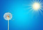 Сlipart dandelion seed wind blue sky   BillionPhotos