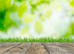 Сlipart easter background grass focus spring   BillionPhotos