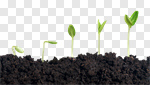 Сlipart plant dirt soil growth green photo cut out BillionPhotos