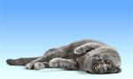 Сlipart cat cats kitty feline grey   BillionPhotos
