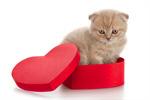 Сlipart Christmas Gift Domestic Cat Box Open photo  BillionPhotos