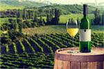 Сlipart Vineyard Agriculture Australia Farm Vine   BillionPhotos