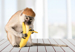 Сlipart Monkey Banana Primate Eating Macaque   BillionPhotos
